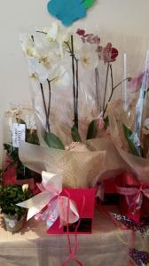Orchid - Gift Bag